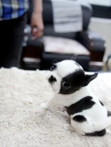 puppies 12