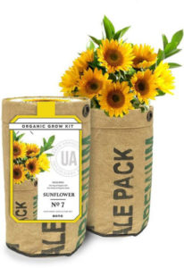 The Urban Agriculture Co organic sunflower grow kit for $18 at barnesandnoble.com