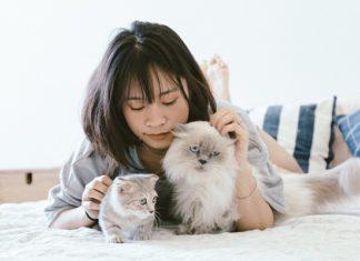 cat felines international day
