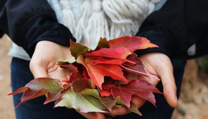 fall activities autumn