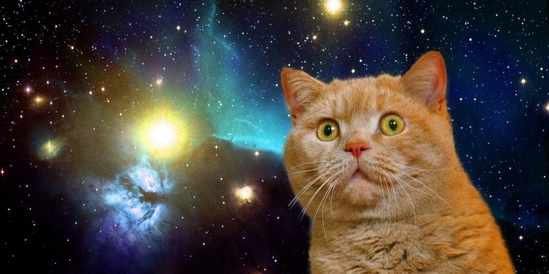 Cat In Space Gif